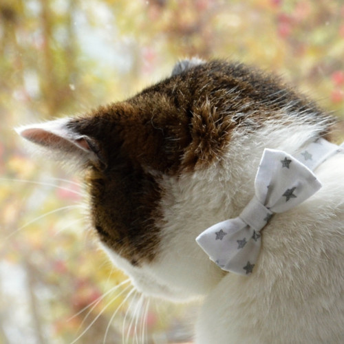Sváteční motýlek pro malé pejsky (i kočičky:-)