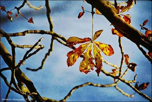 Autumn Harmony II