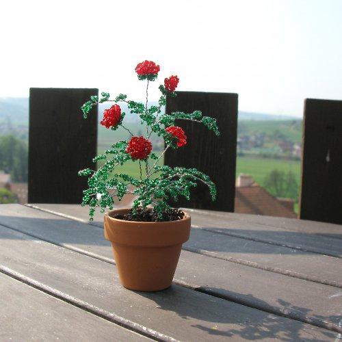 Červené korálkové růže