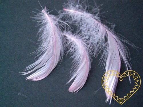 Peříčka růžová - balení 15 g (přes 200 ks)