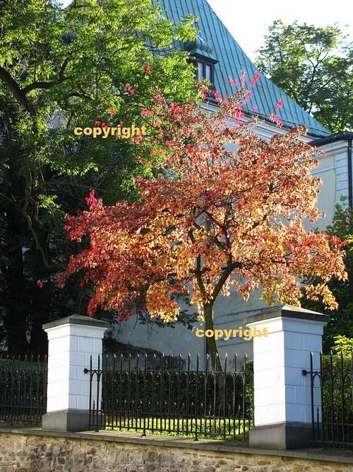 Podzim v zámecké zahradě