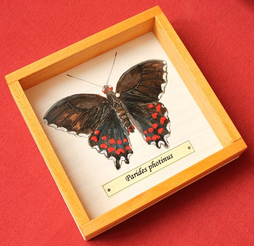 Parides photinus