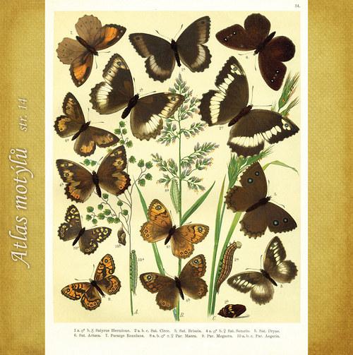 Motýli - str. 14 - formát A4
