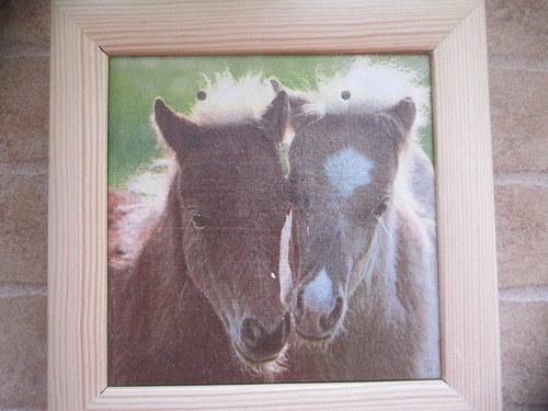 Kůň 5