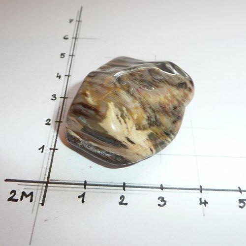 Zkamenělé dřevo ČR