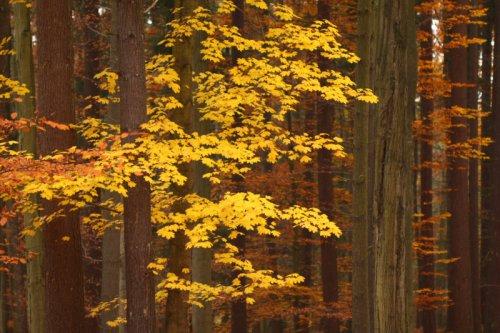 V tajemném lese III.