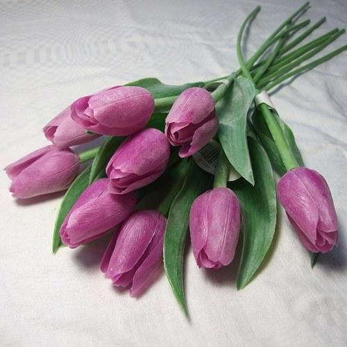 Tulipán purpurový