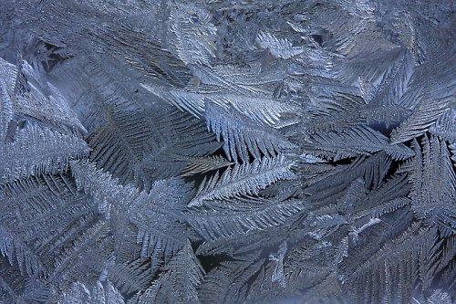 Ledové větvičky