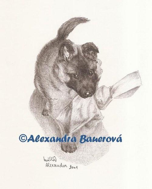 Belgický ovčák Tervueren (štěně)