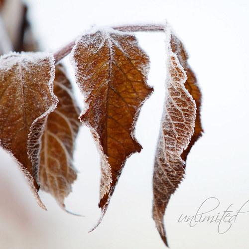 """Fotografie \""""Podzimní mrazík\"""""""