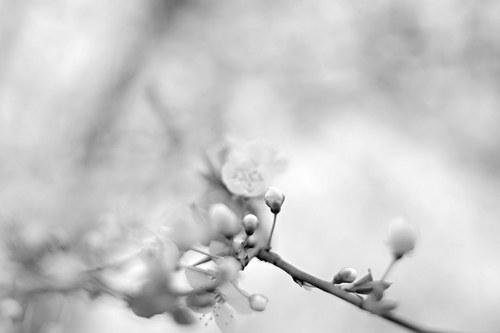 Černobílé květy