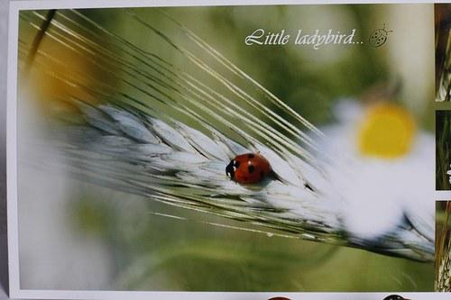 Little ladybird...