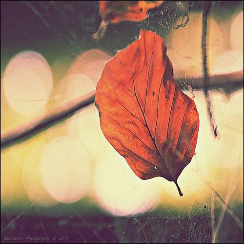 Autumn Memories III