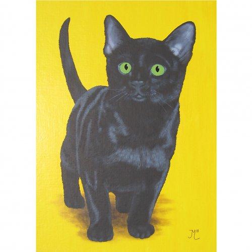 Kotě I.