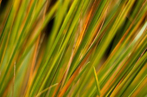 Podzimní trávy