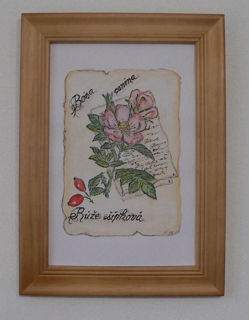 Růže s rámem