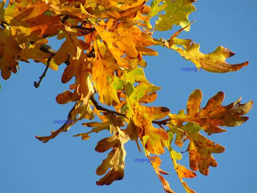 Zlaté listí
