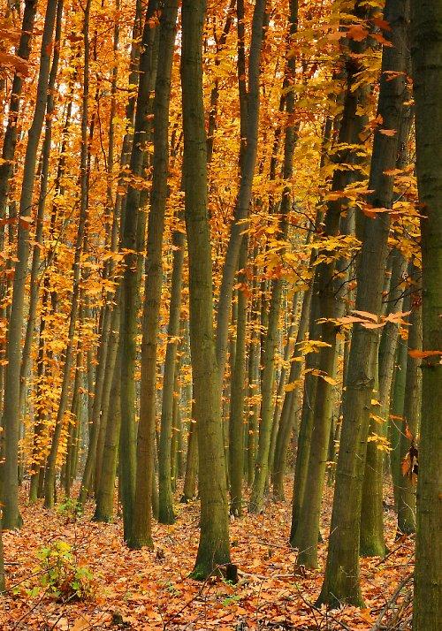 Stromy - Mělník - Chlumek