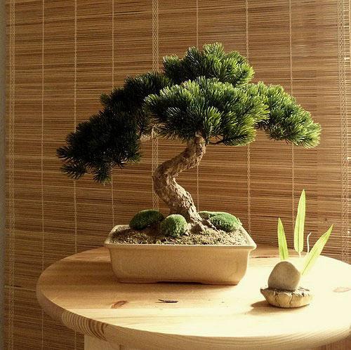 Neživá bonsaj, dekorace do interieru