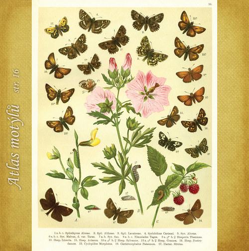Motýli - str. 16 - formát A4