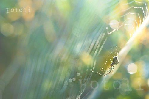 Ráno v pavučině
