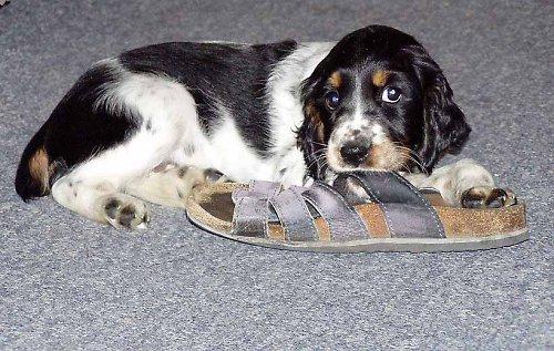 Lajka a bota