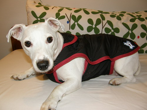 Zimní kabátek pro fenky 40 cm