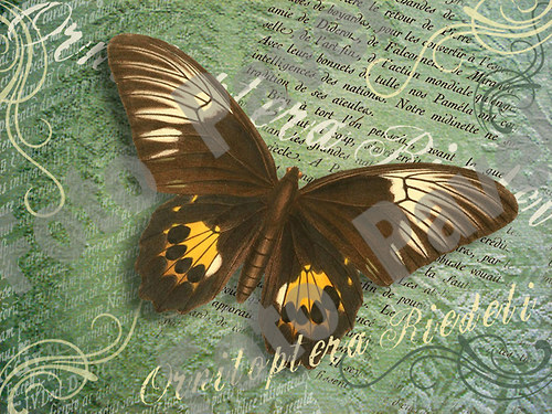 Vintage motiv - motýl 9