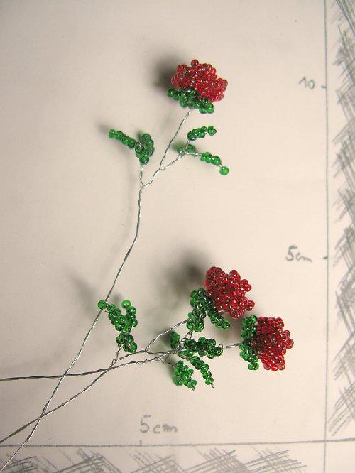 Růže korálková červená