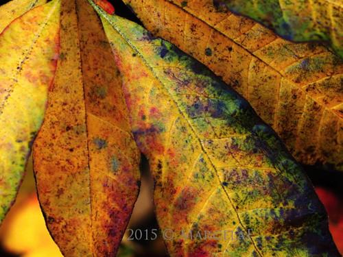 Listování podzimním vydáním
