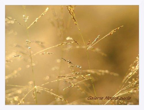 zlato v lukách......... A3