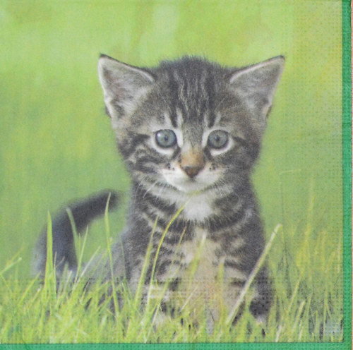 Ubrousek - kočička