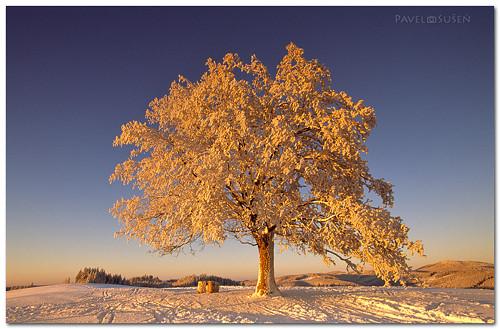 V království paní Zimy