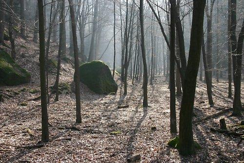 Prosluněný les