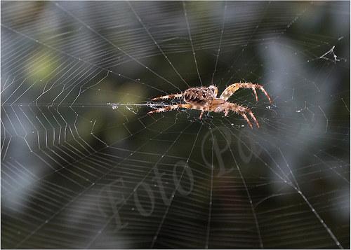Pavouk a jeho síť ...