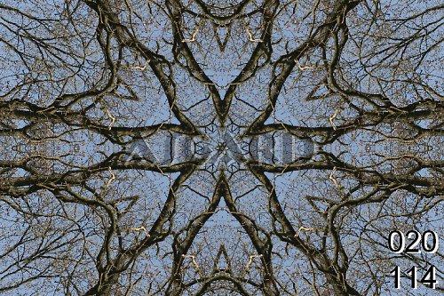 Mandala stromů