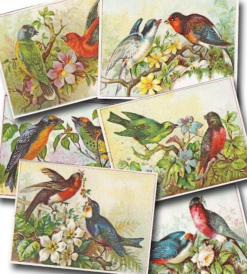 Nažehlovací obrázky - Ptáčci I.- cena za 3 obrázky