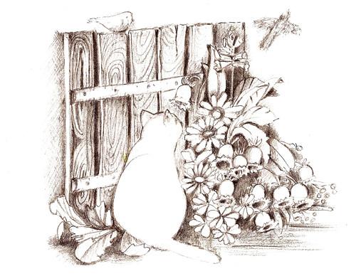 Kocourek  v záhoně -  blahopřání