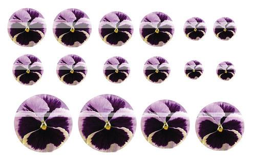 Návrh na pryskyřici - květiny č.2