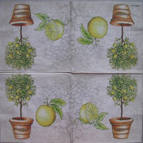 Citronovník na šedé č.1759