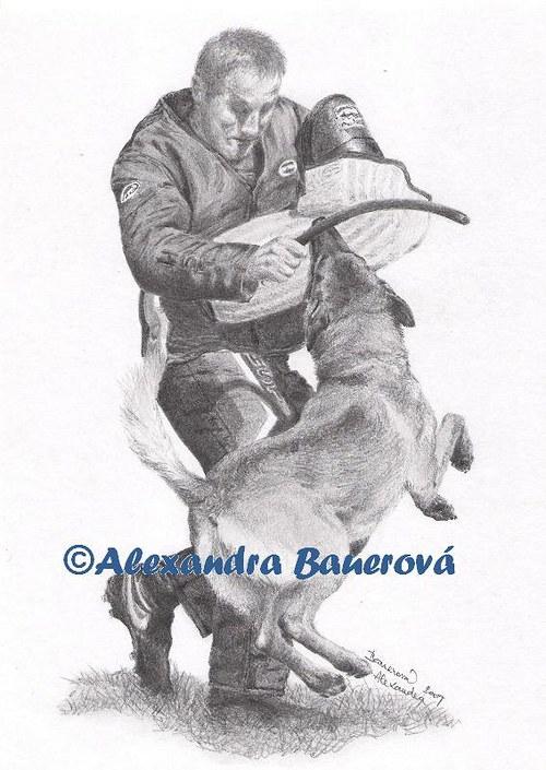 Belgický ovčák Malinois (sport - výcvik)