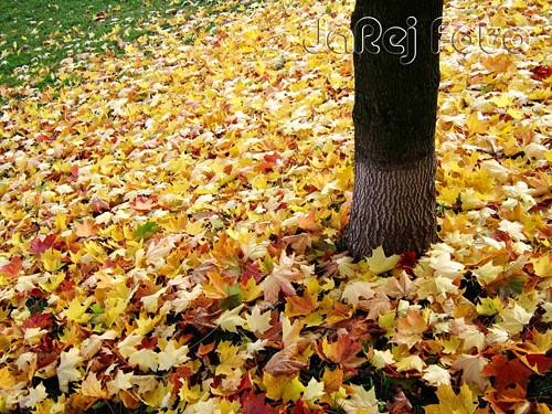 Napadané listí