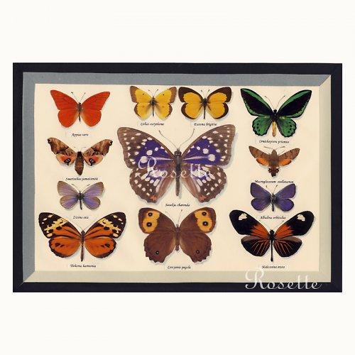 Slečno, mám doma krásnou sbírku motýlů - foto