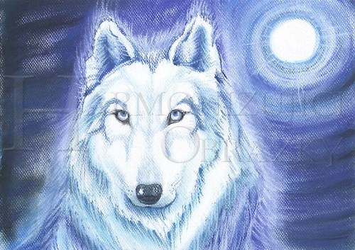 Bílý vlk A5
