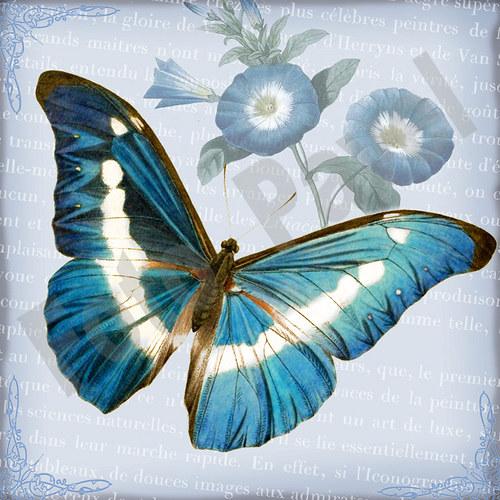 Vintage motiv - motýl 2