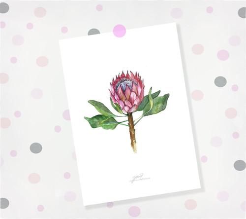 Protea. Signovaný tisk do rámu A4