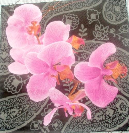 Orchidej na černém