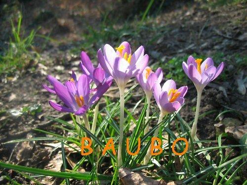 jaro na Petříně