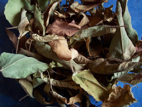 eukalyptus list