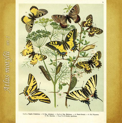 Motýli - str. 2 - formát A4